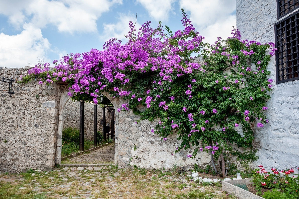 Stone gate covered in flowers