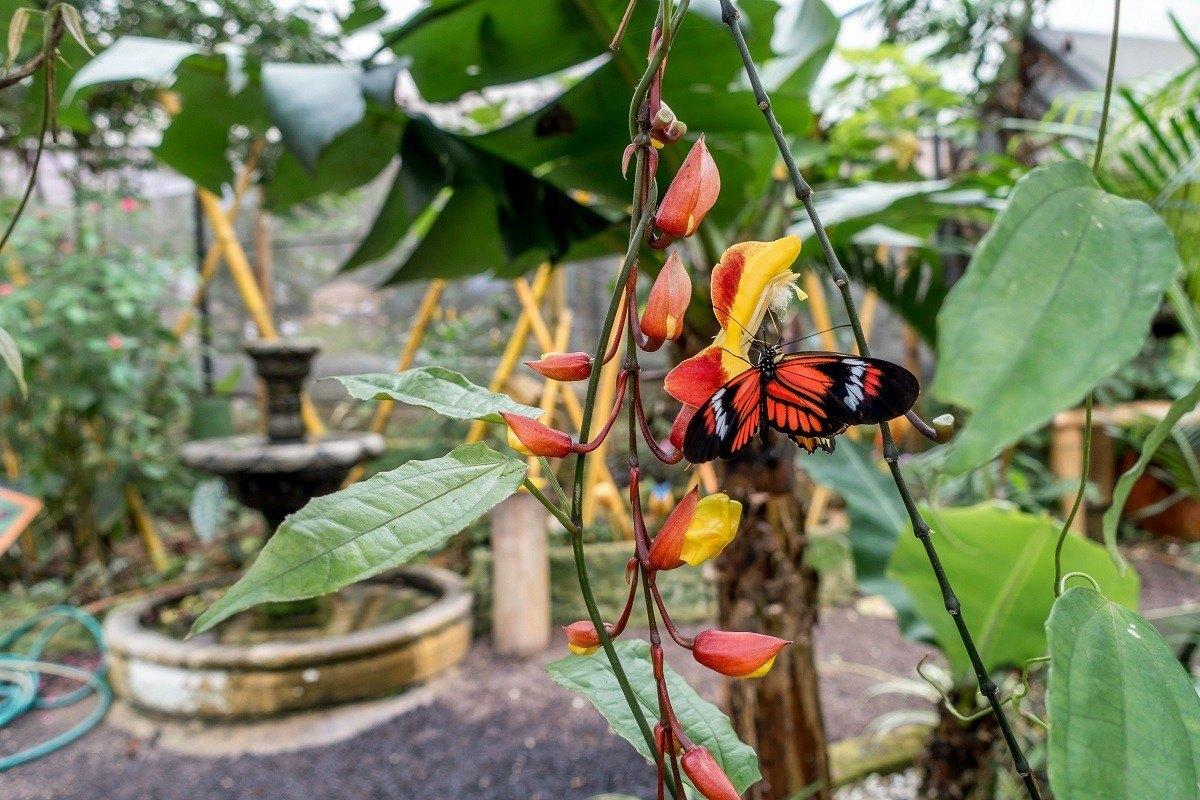 Orange butterfly on a plant