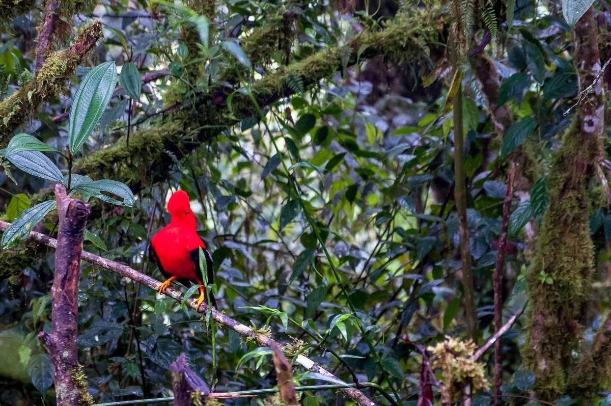 Bright red bird