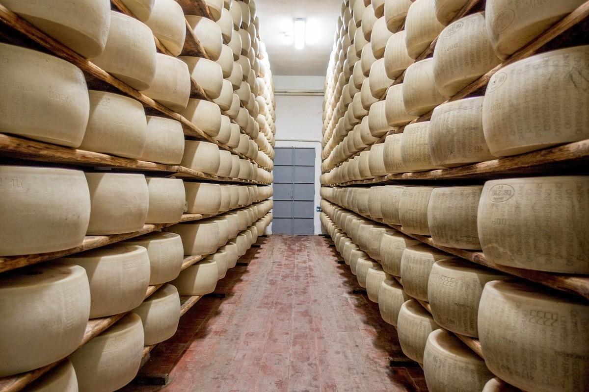 Wheels of Parmigiano-Reggiano aging at a dairy in Parma, Italy