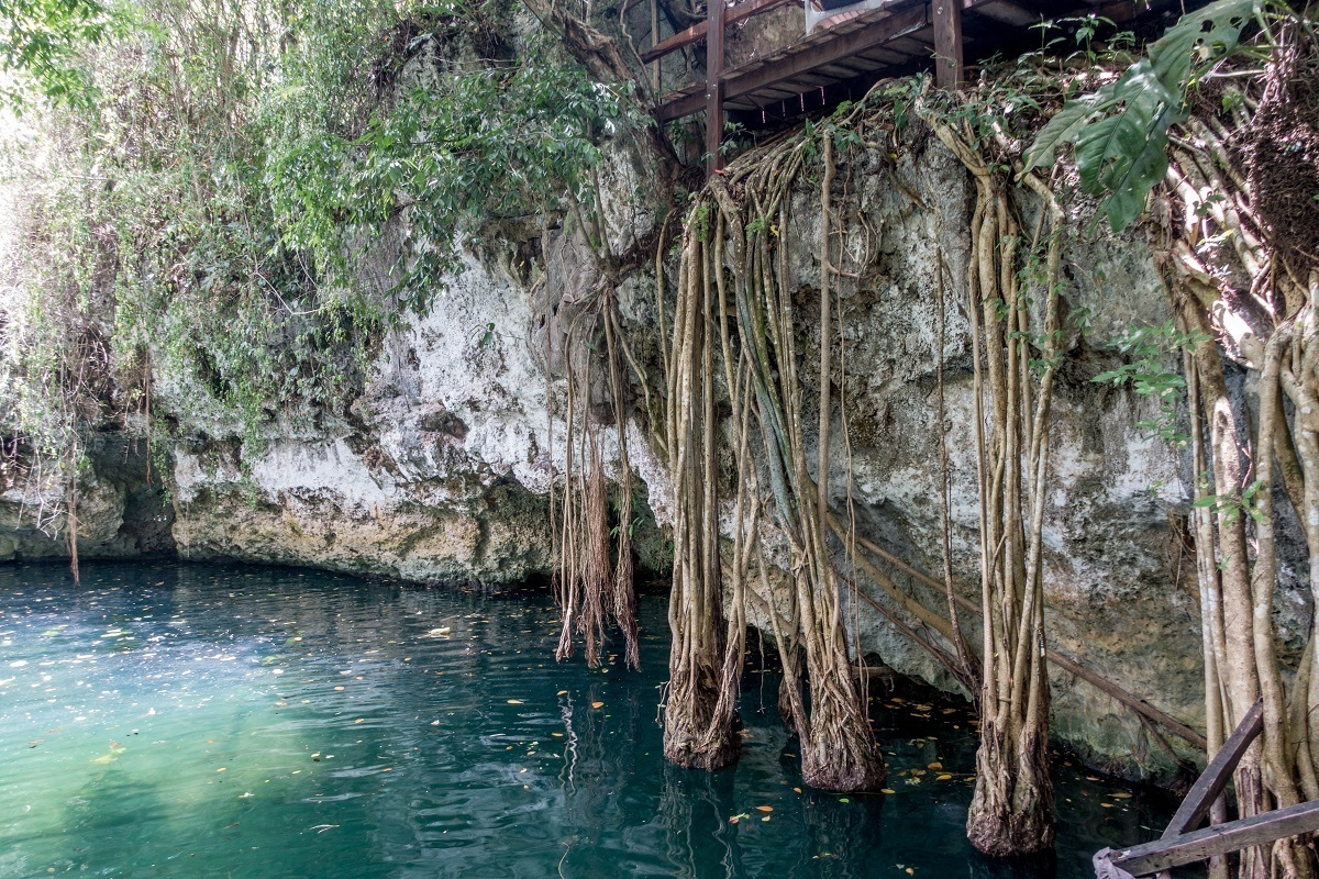 Tree roots growing down into the water at the Cenote Verde Lucero