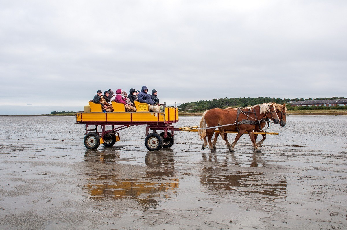 Visitors take a horse-drawn wagon across the tidal flats to Neuwerk Island in the Wadden Sea National Park.
