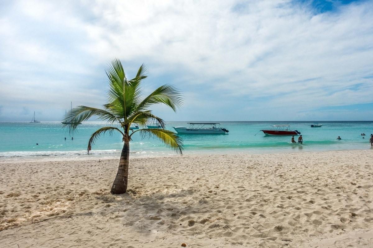Lone palm tree on beach on Saona Island, Dominican Republic