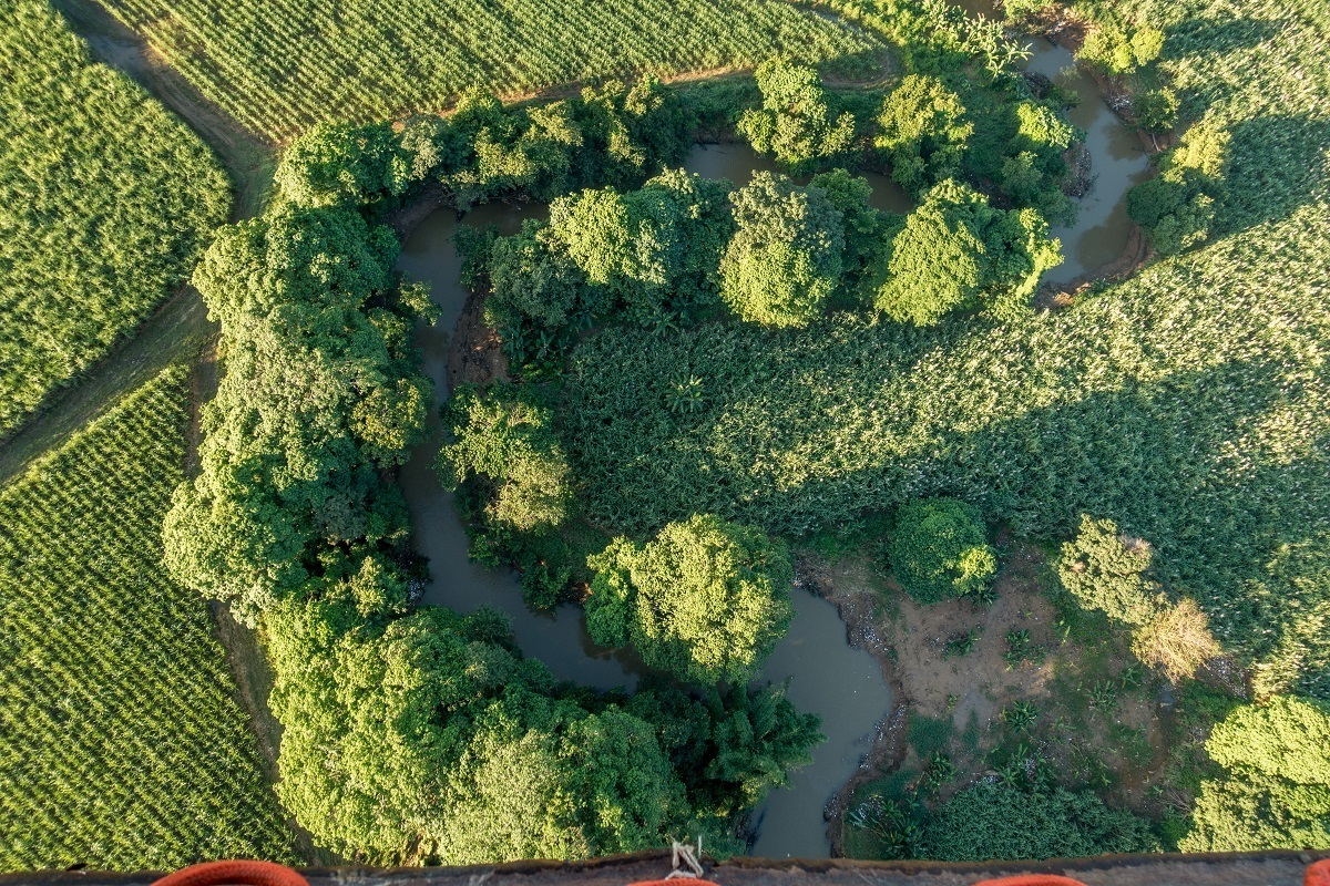 Overhead view of trees