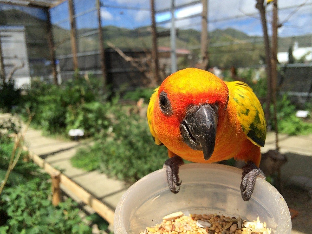 The Parotte Ville Bird Park is one of the top things to do in Saint Martin for locals.