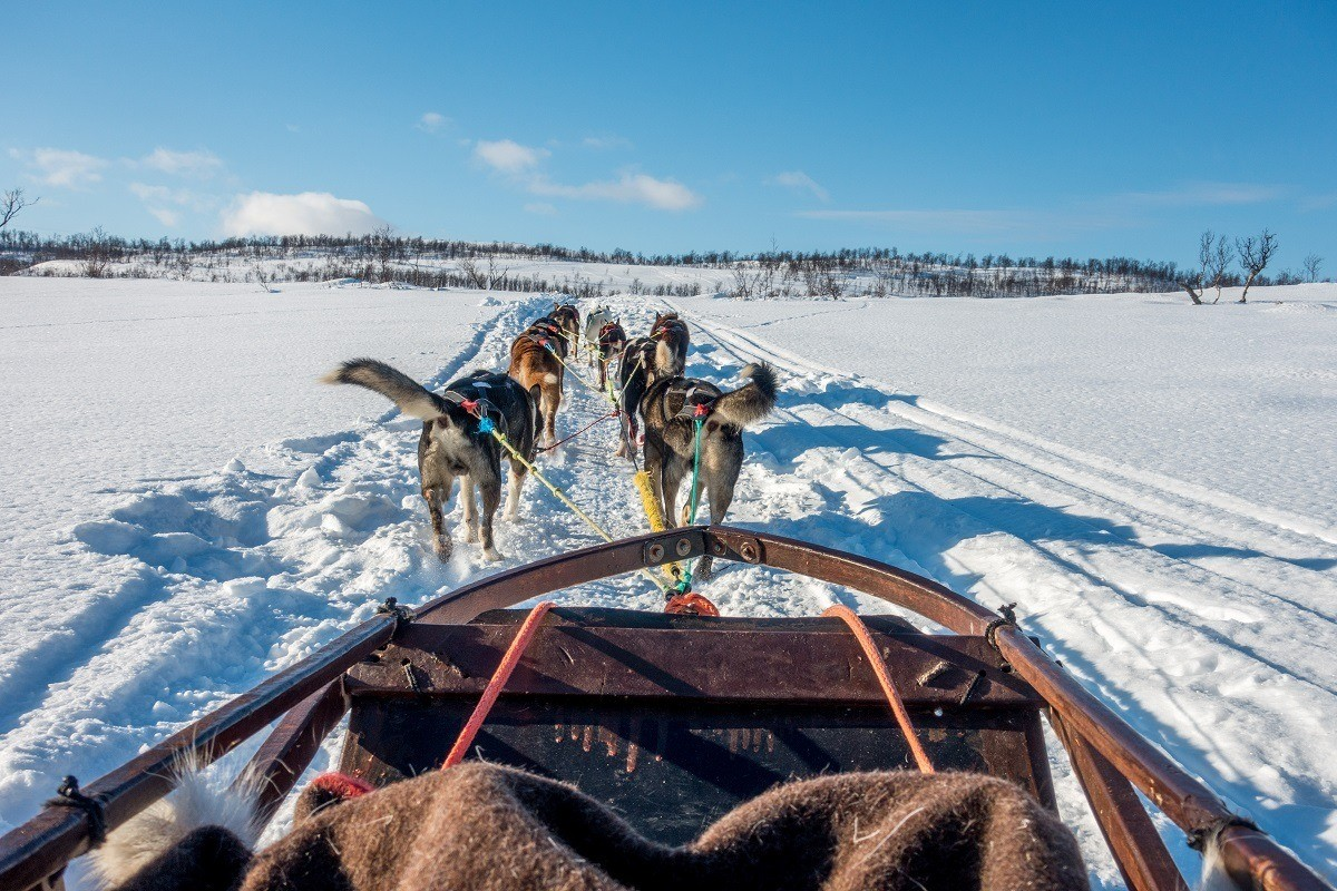 Behind the team while dog sledding in Tromso, Norway