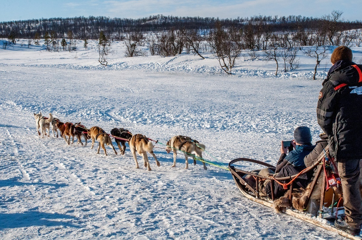 Dogs pulling a sled in Tromso, Norway