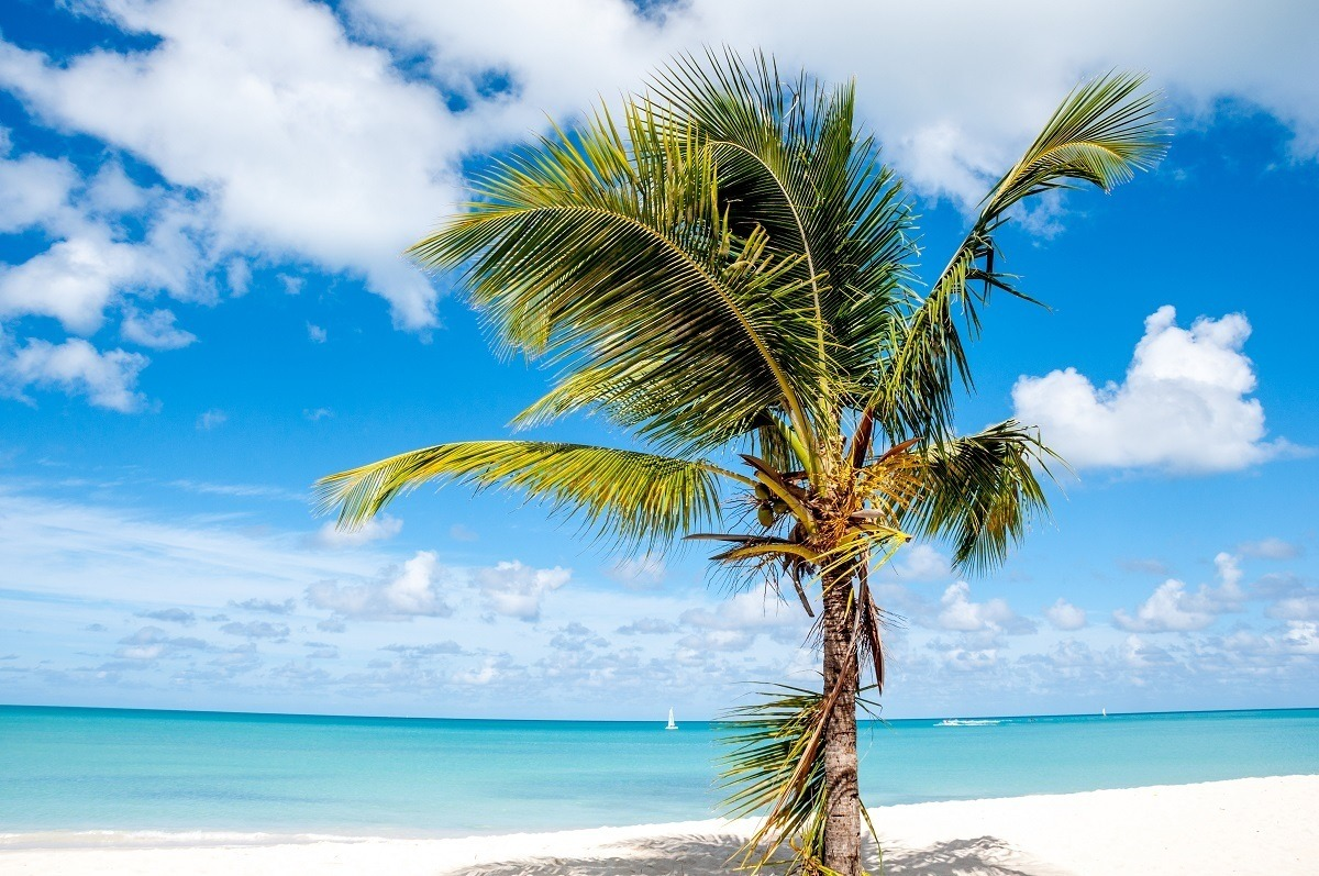 A lone palm tree on a beach by the ocean