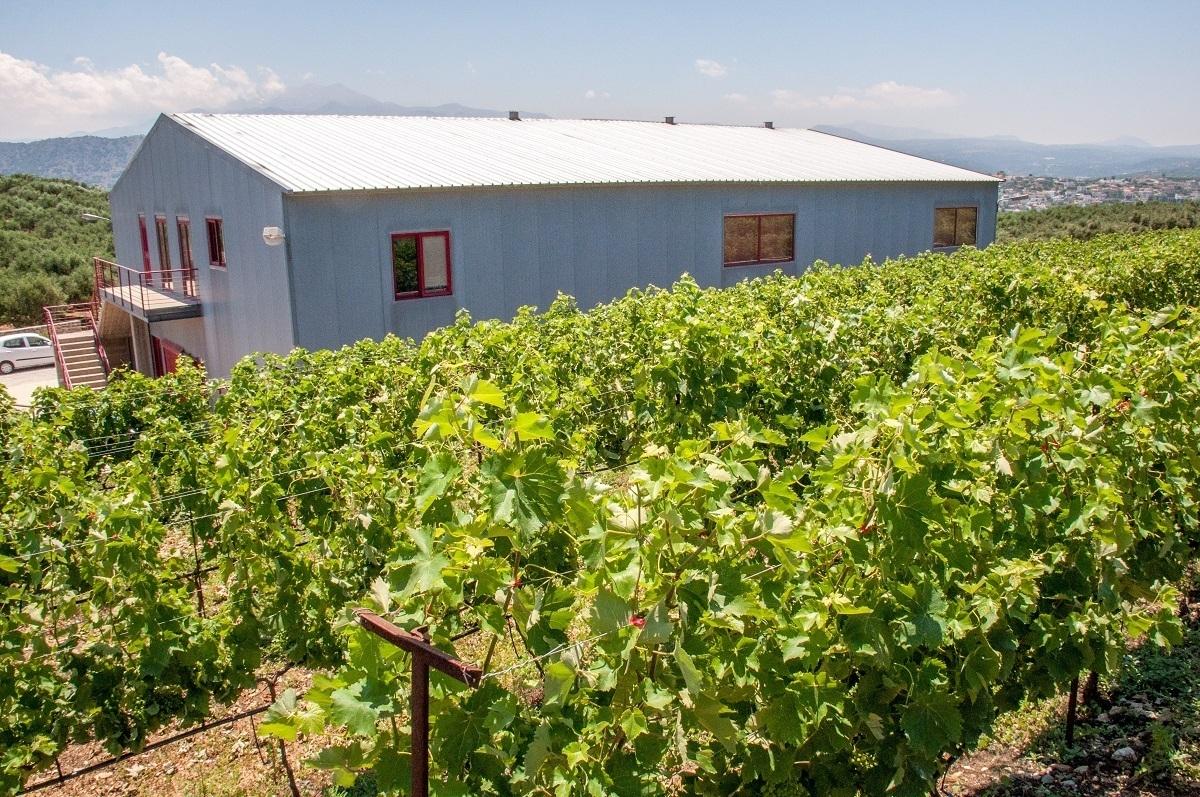 Vineyard and tasting room at Klados Winery