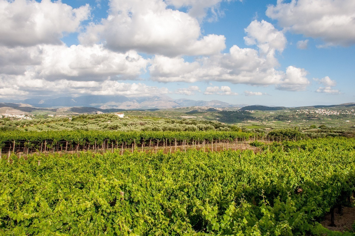 Stilianou Winery vineyards outside Heraklion, Crete