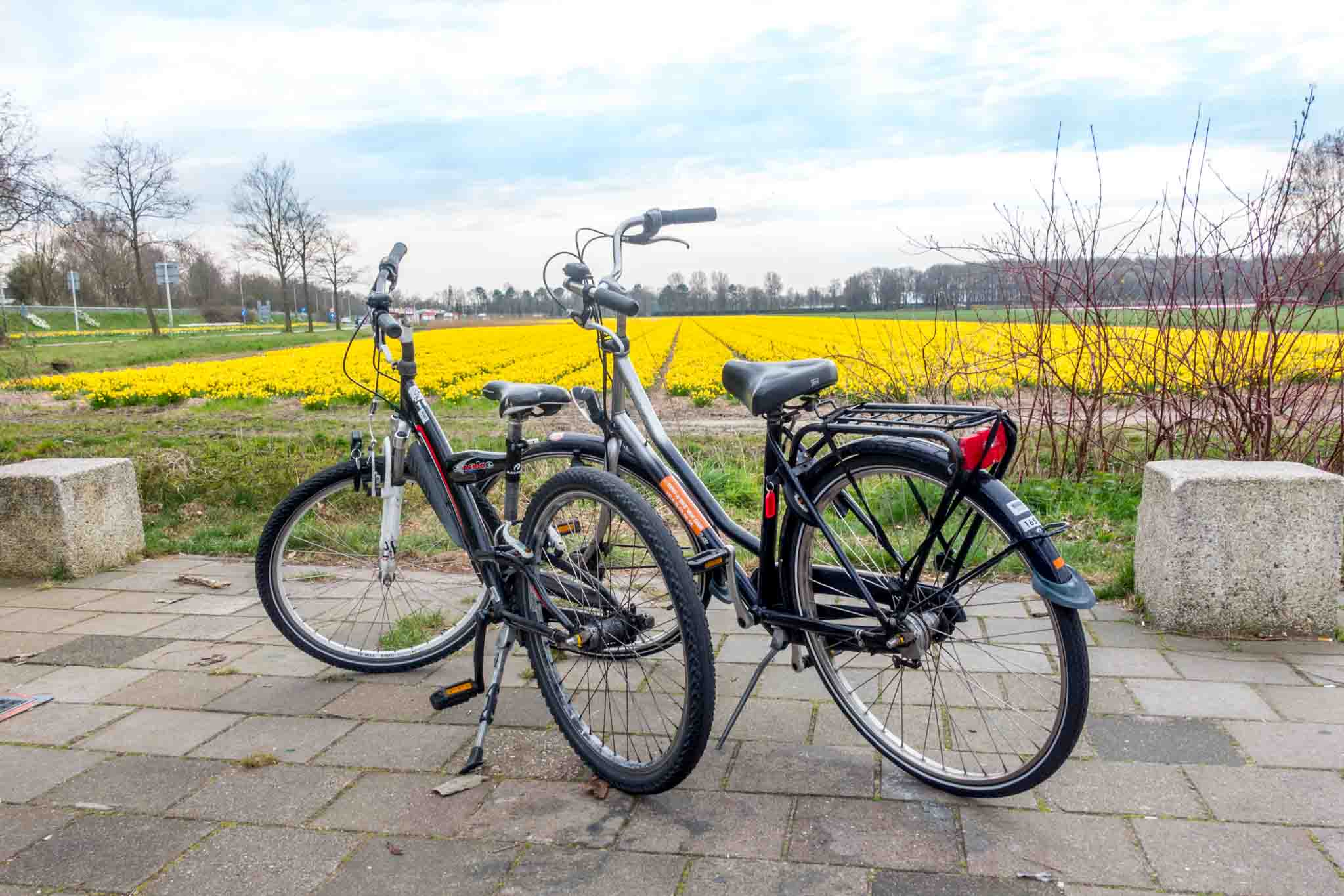 Bicycles beside a flower field