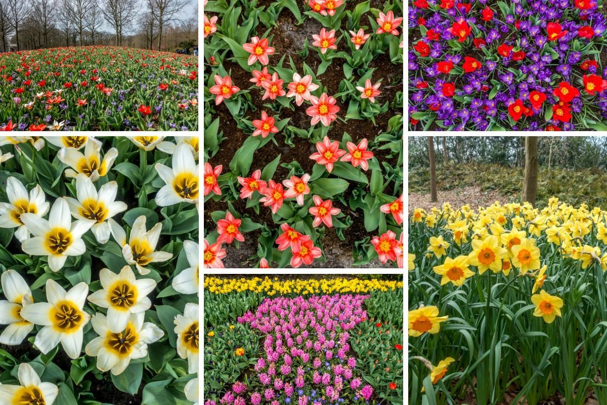 Flowers in the Netherlands in spring