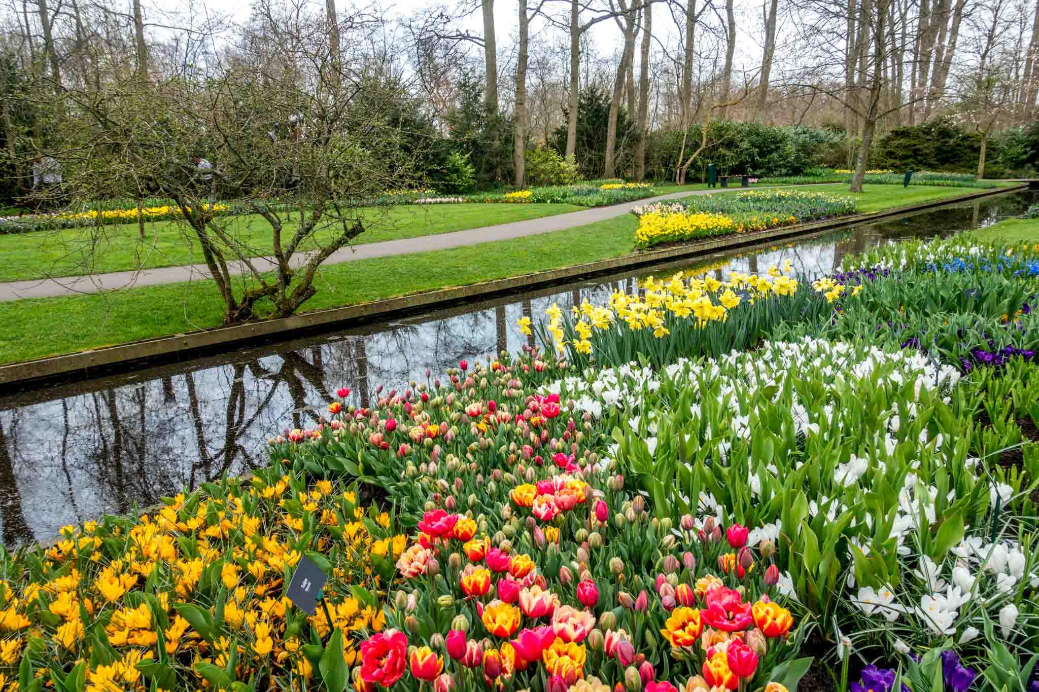 Tulips and flowers beside a canal