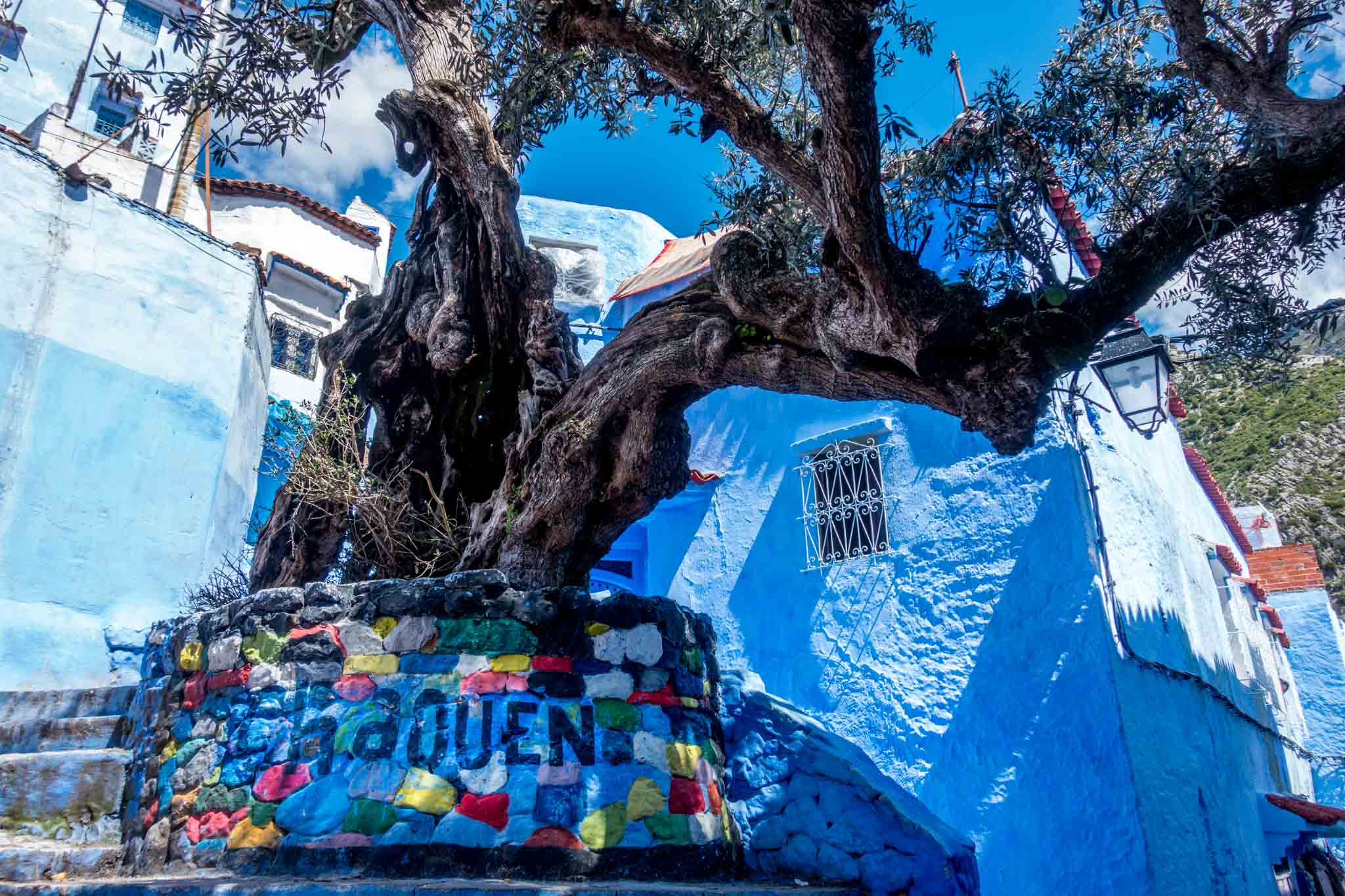 """Tree with a base labeled """"Chaouen"""""""