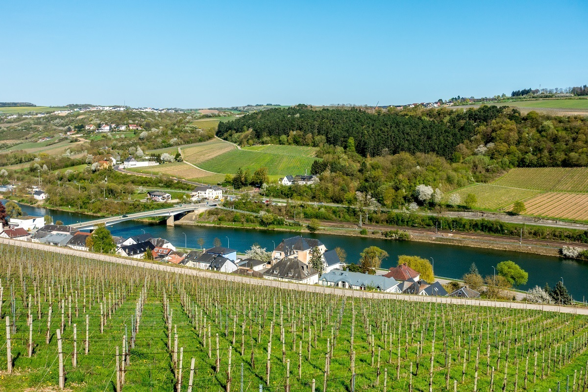Vineyards in the Moselle River valley growing grapes for Luxembourg wine