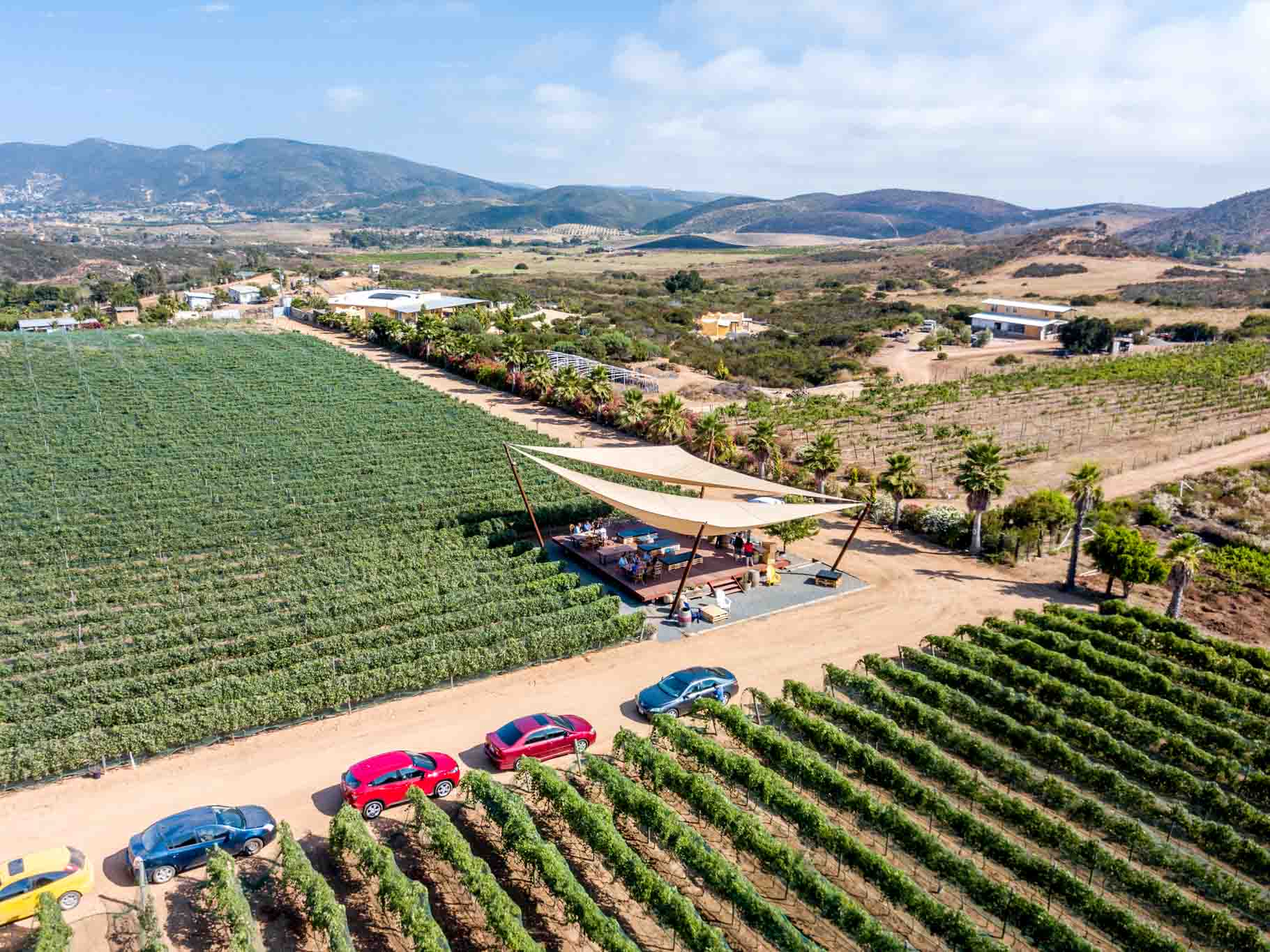 Aerial view of rows of vines in the Mexico wine country