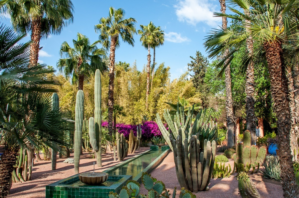 Cacti and trees in a garden