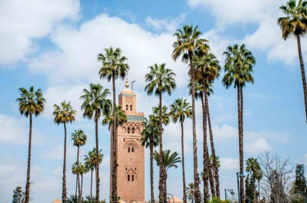 Tower surrounded with palm trees