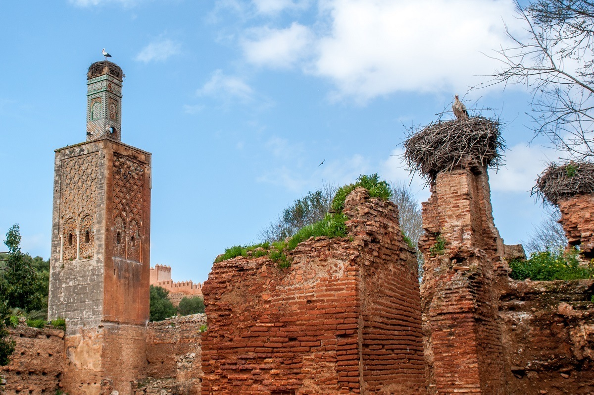 Storks in large nests at the Chellah in Rabat