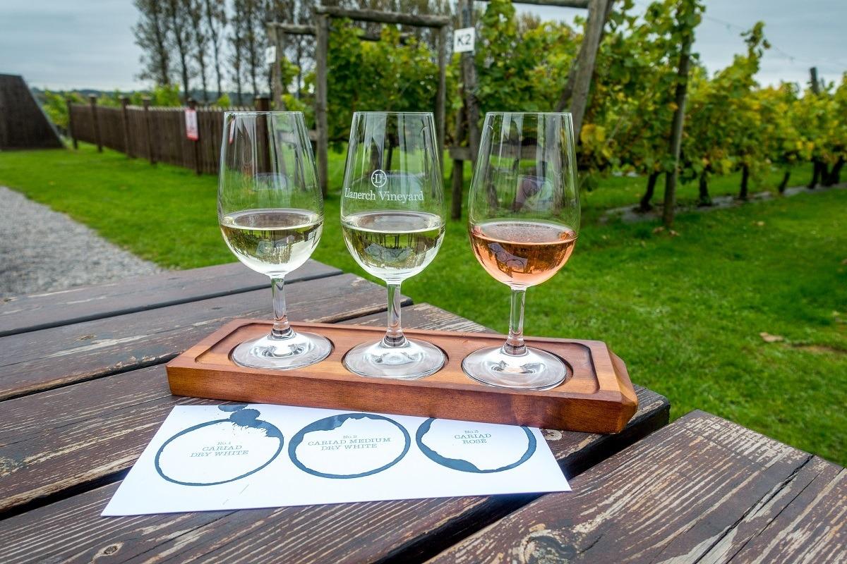 Three glasses of wine beside vineyards