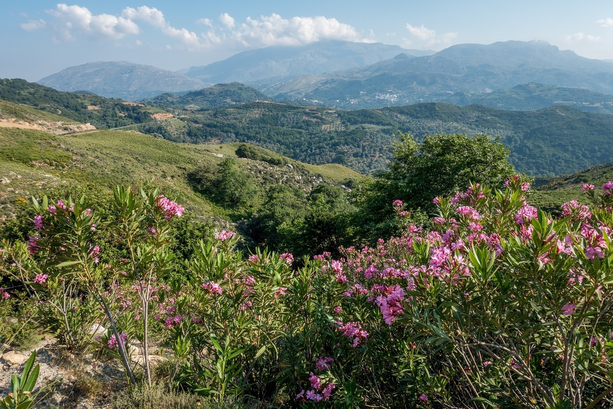 Mountain views studded with bougainvillea