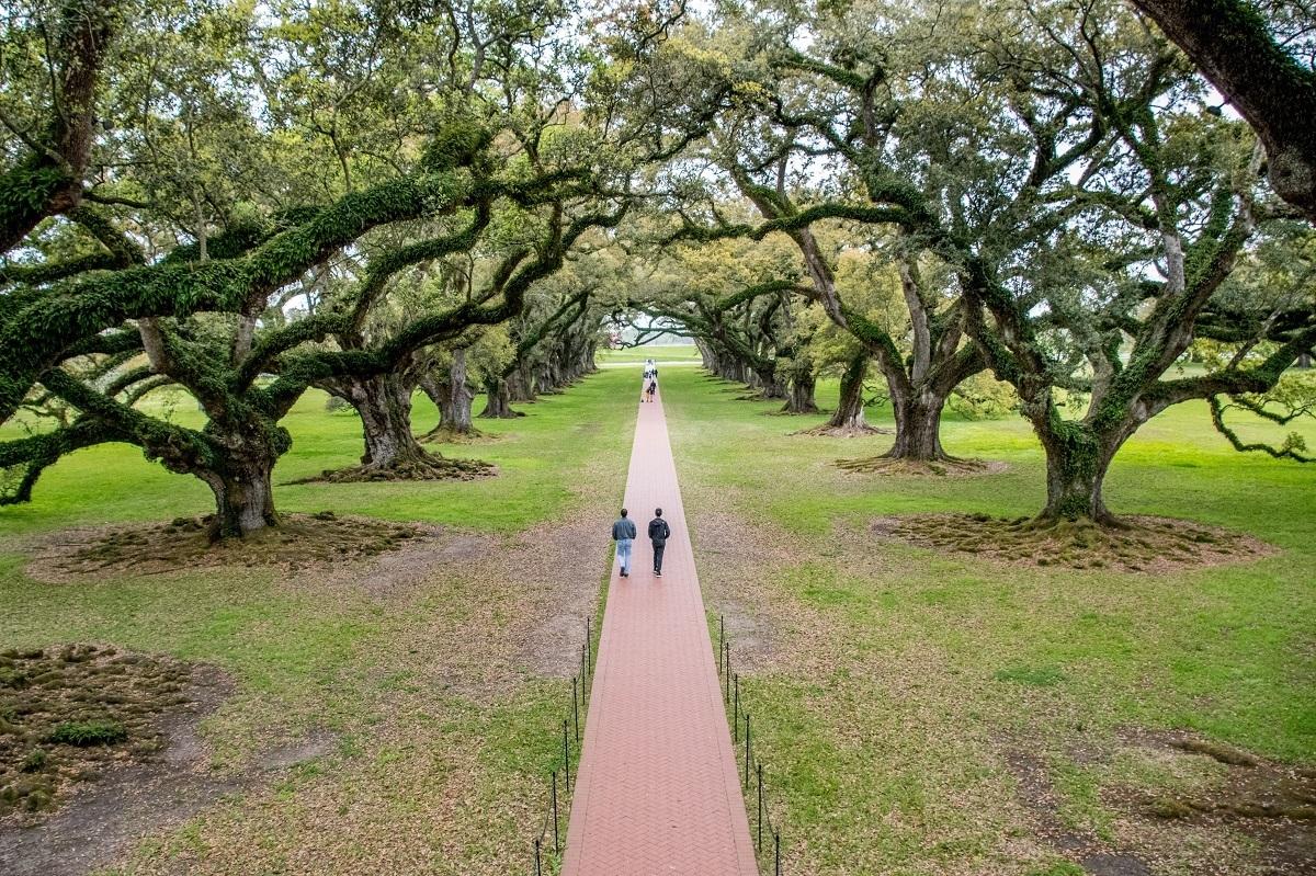 People walking past large oak trees