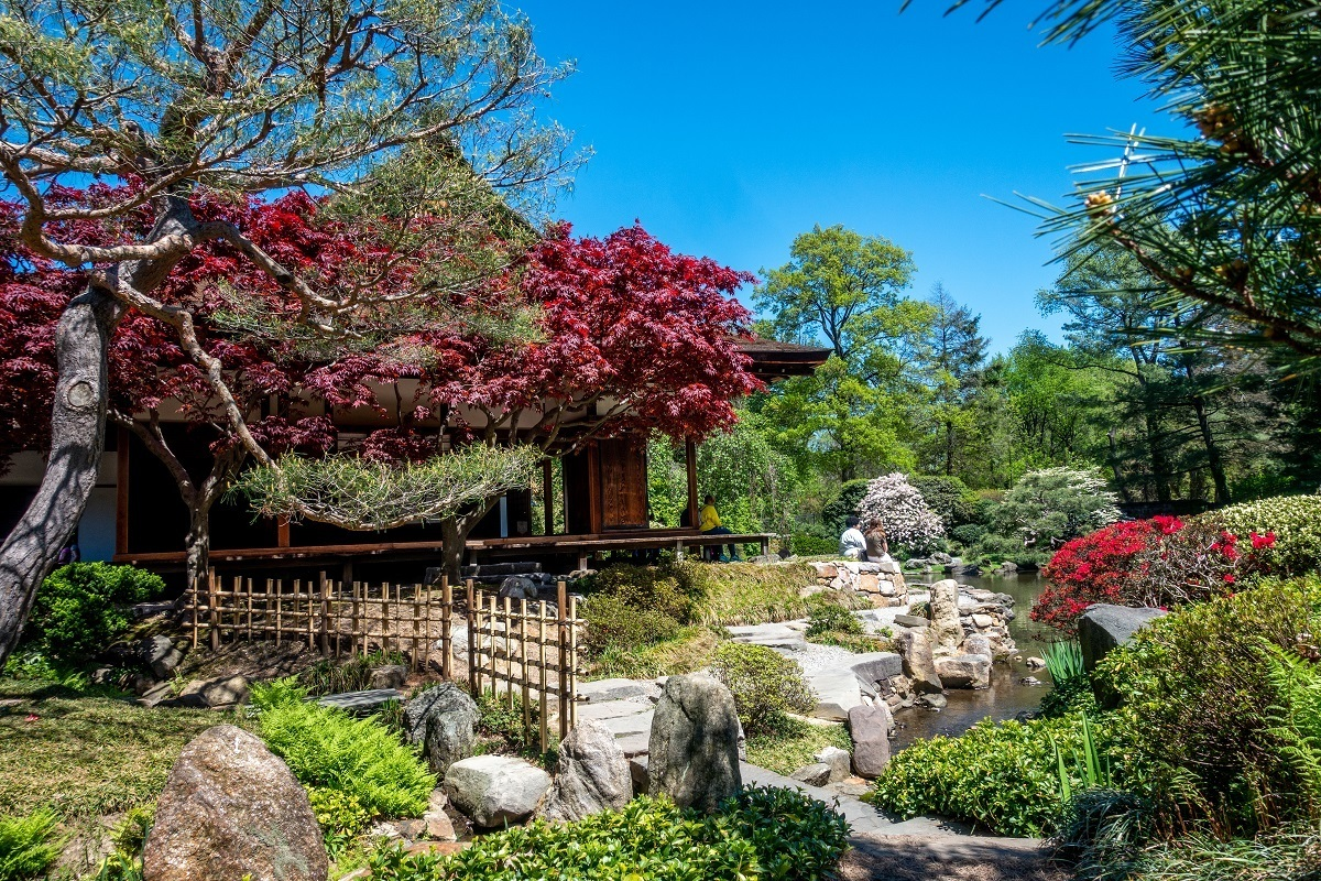Plants and trees with traditional Japanese house