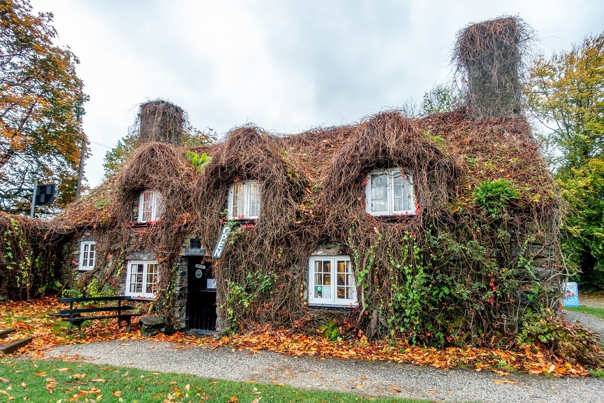 Small, ivy-covered building
