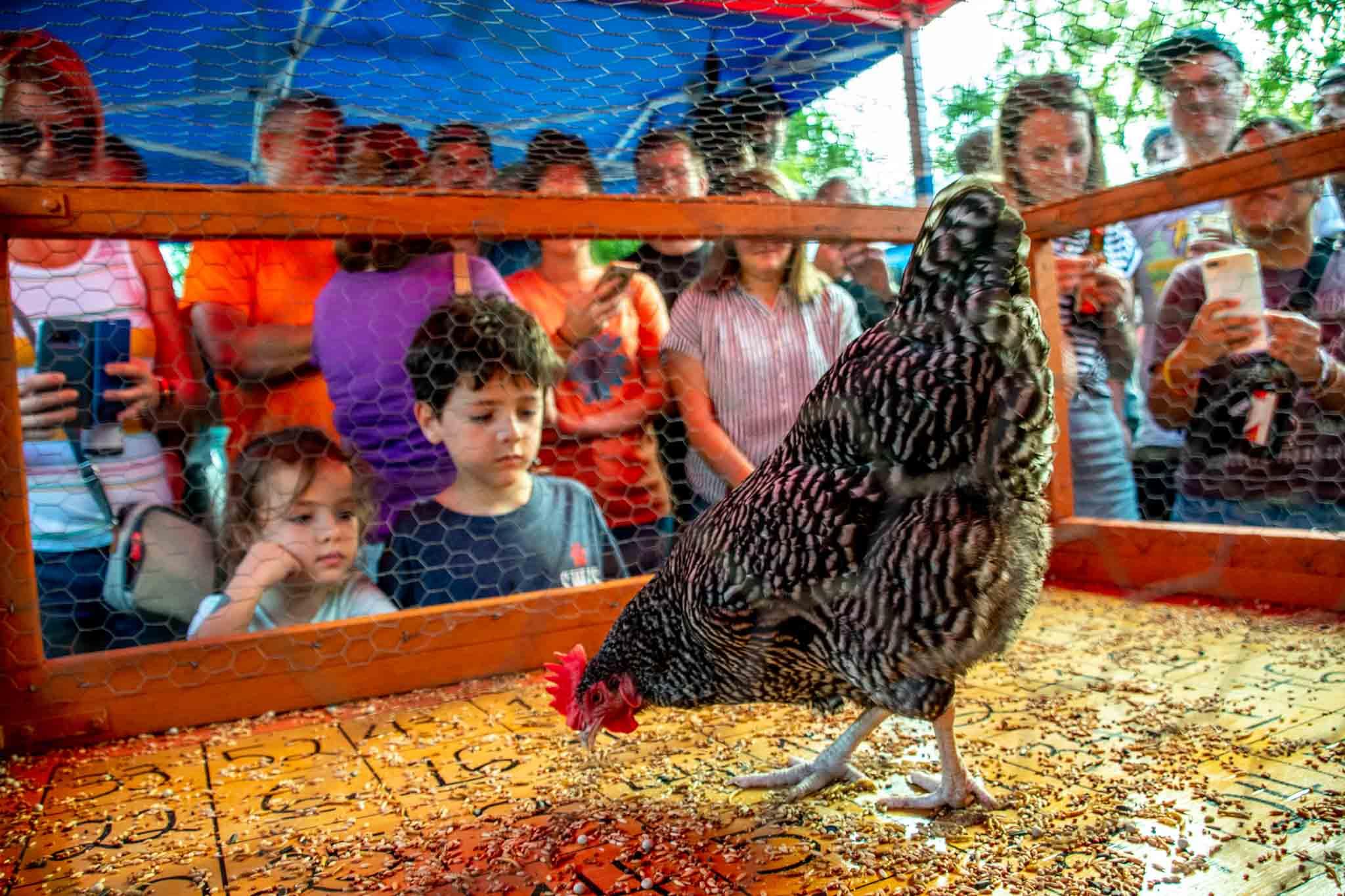 Kids watching a chicken on the bingo board
