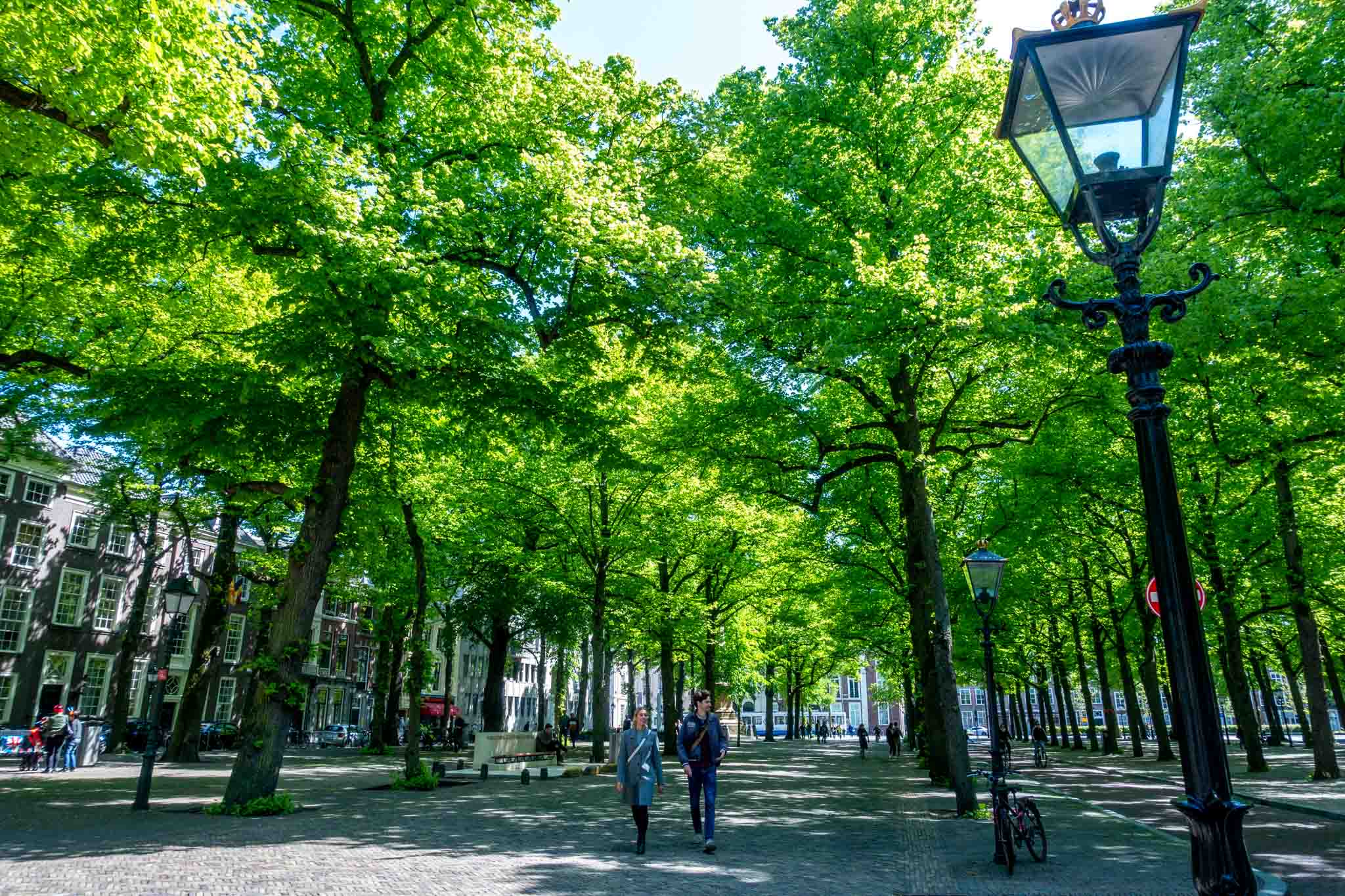 People walking under a row of trees
