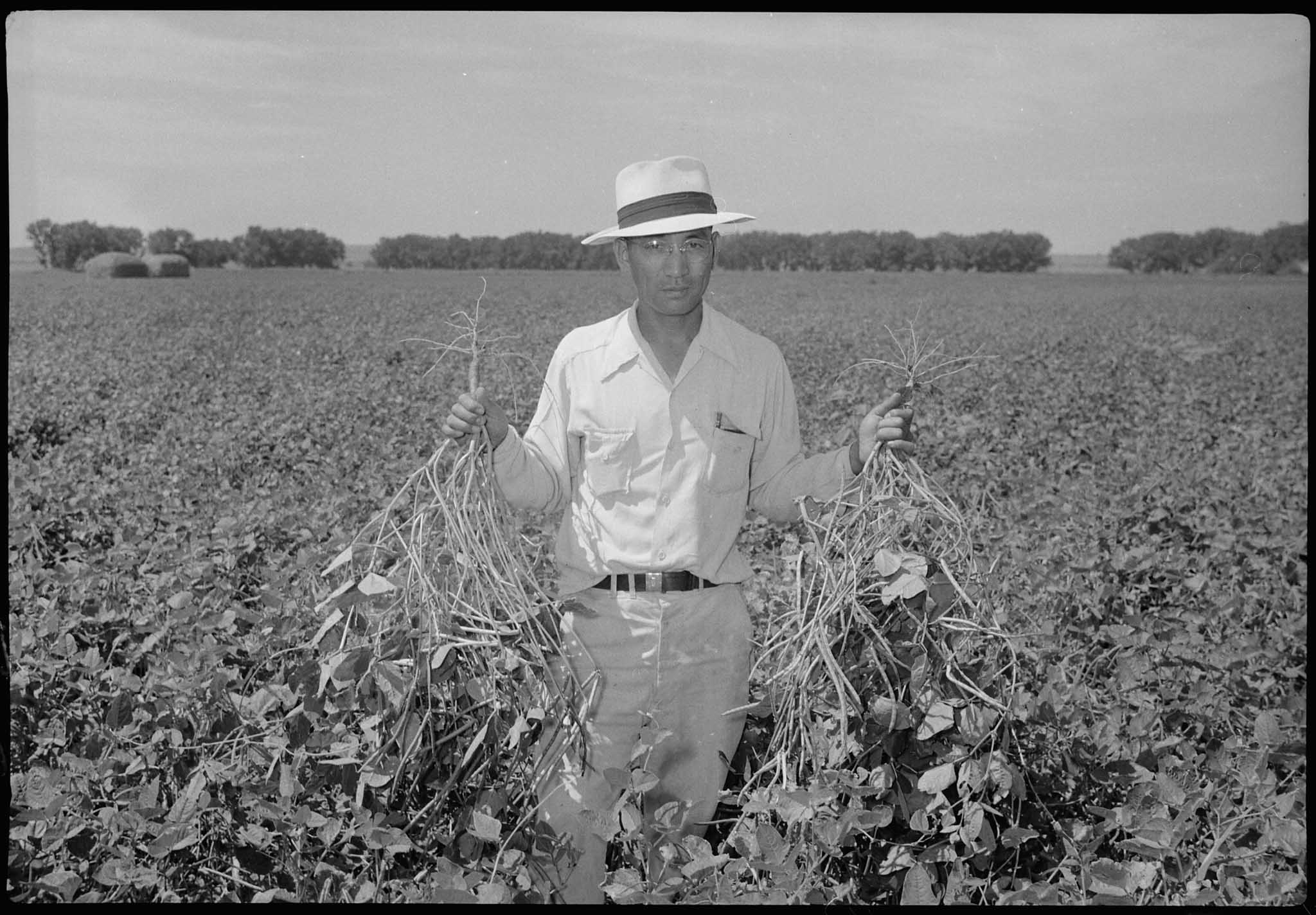 Man holding crops in a field