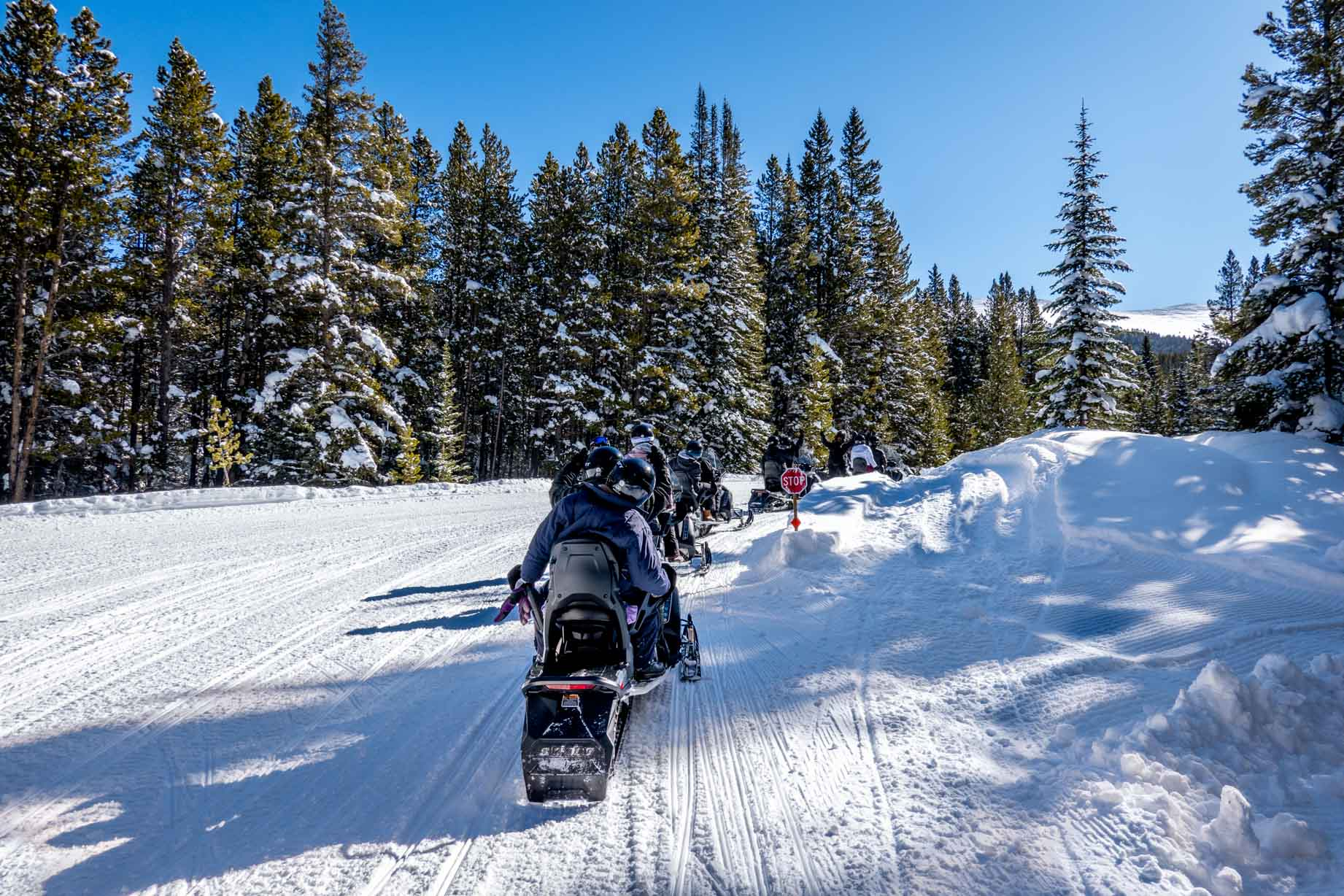 Group going snowmobiling surrounded by snow-covered trees