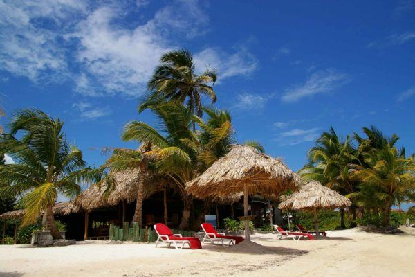 Chairs under umbrellas beside palm trees on a beach