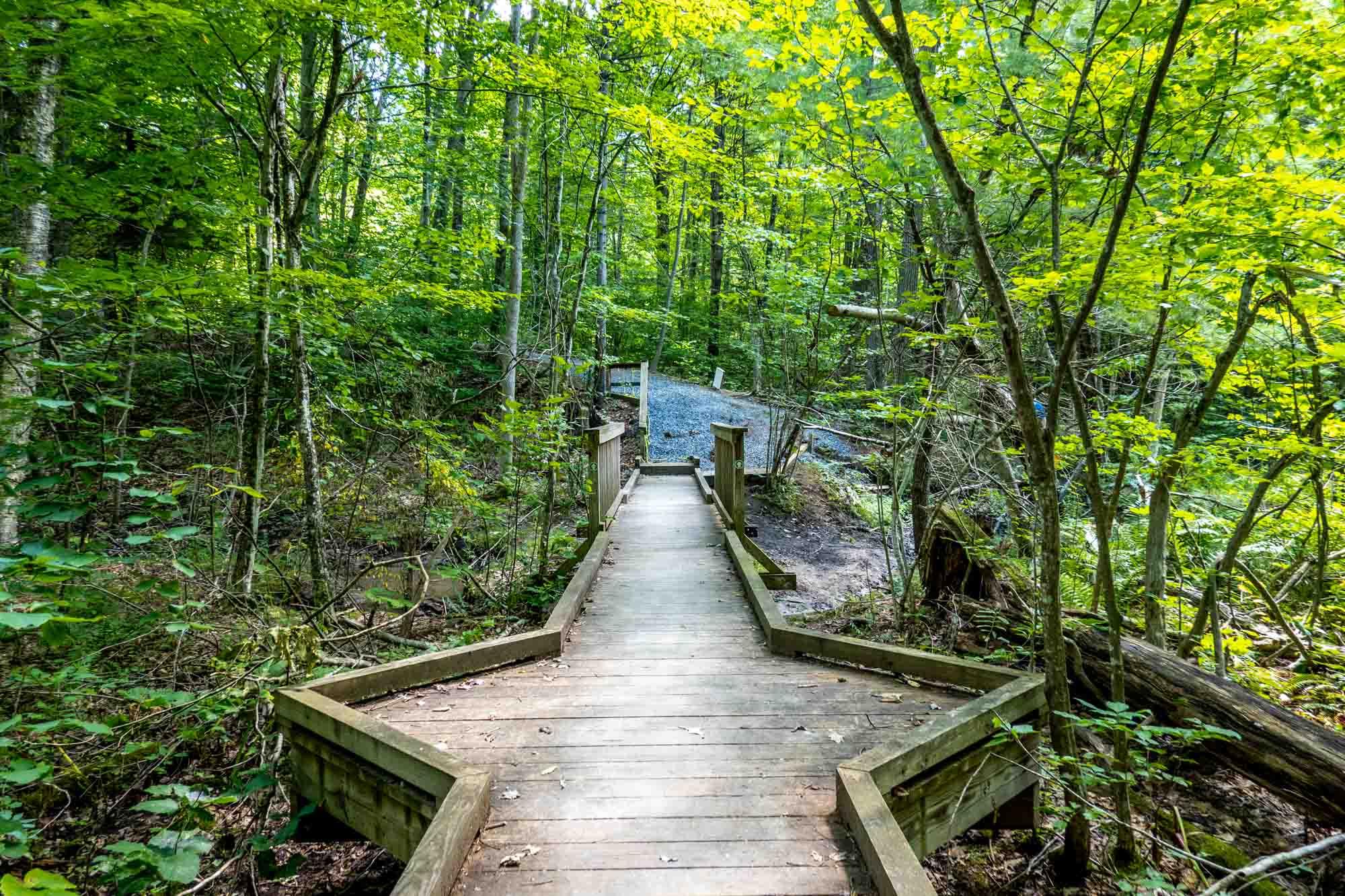 Wooden walkway through lush, green vegetation