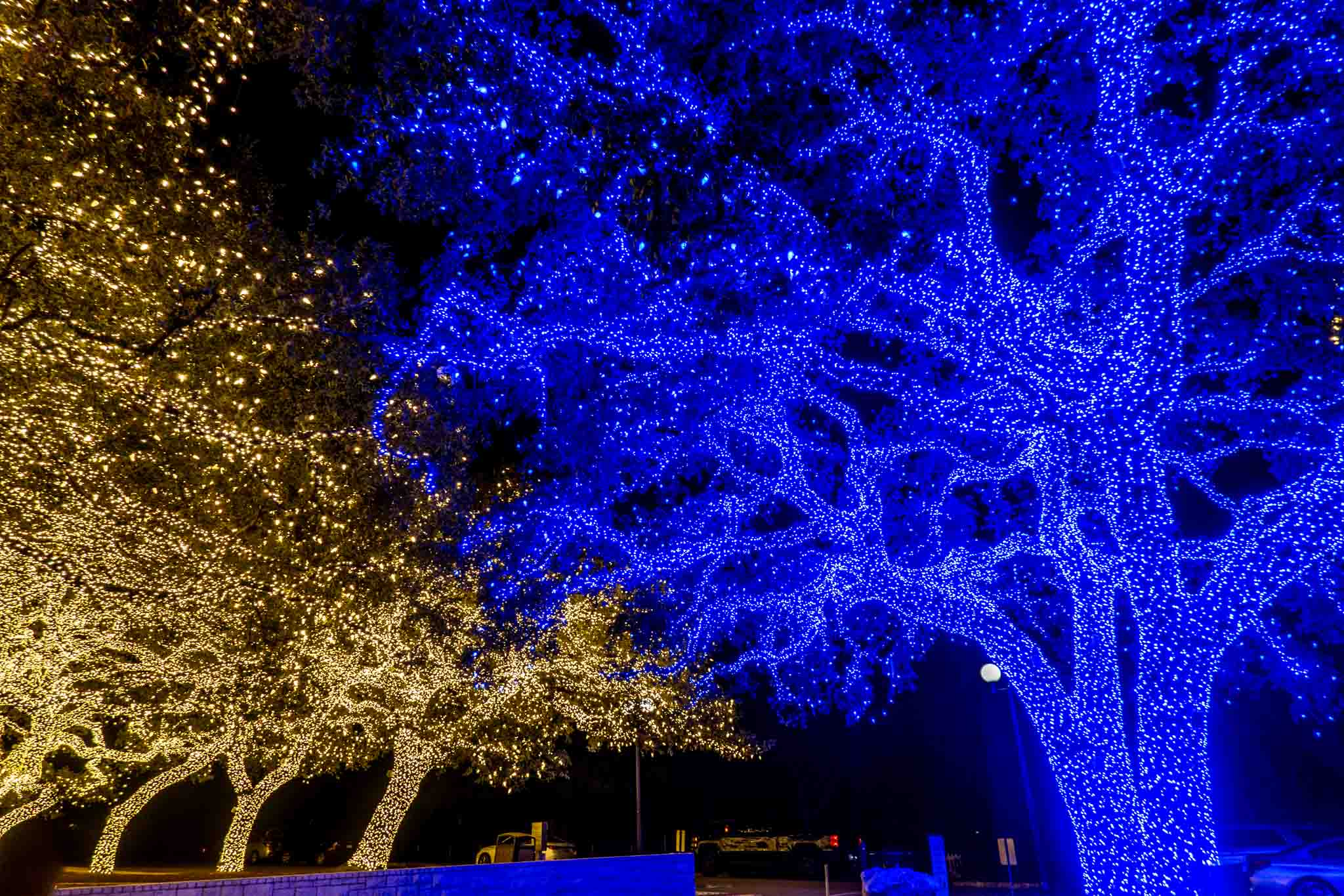 Trees completely covered in white lights beside trees completely covered in blue Christmas lights at night
