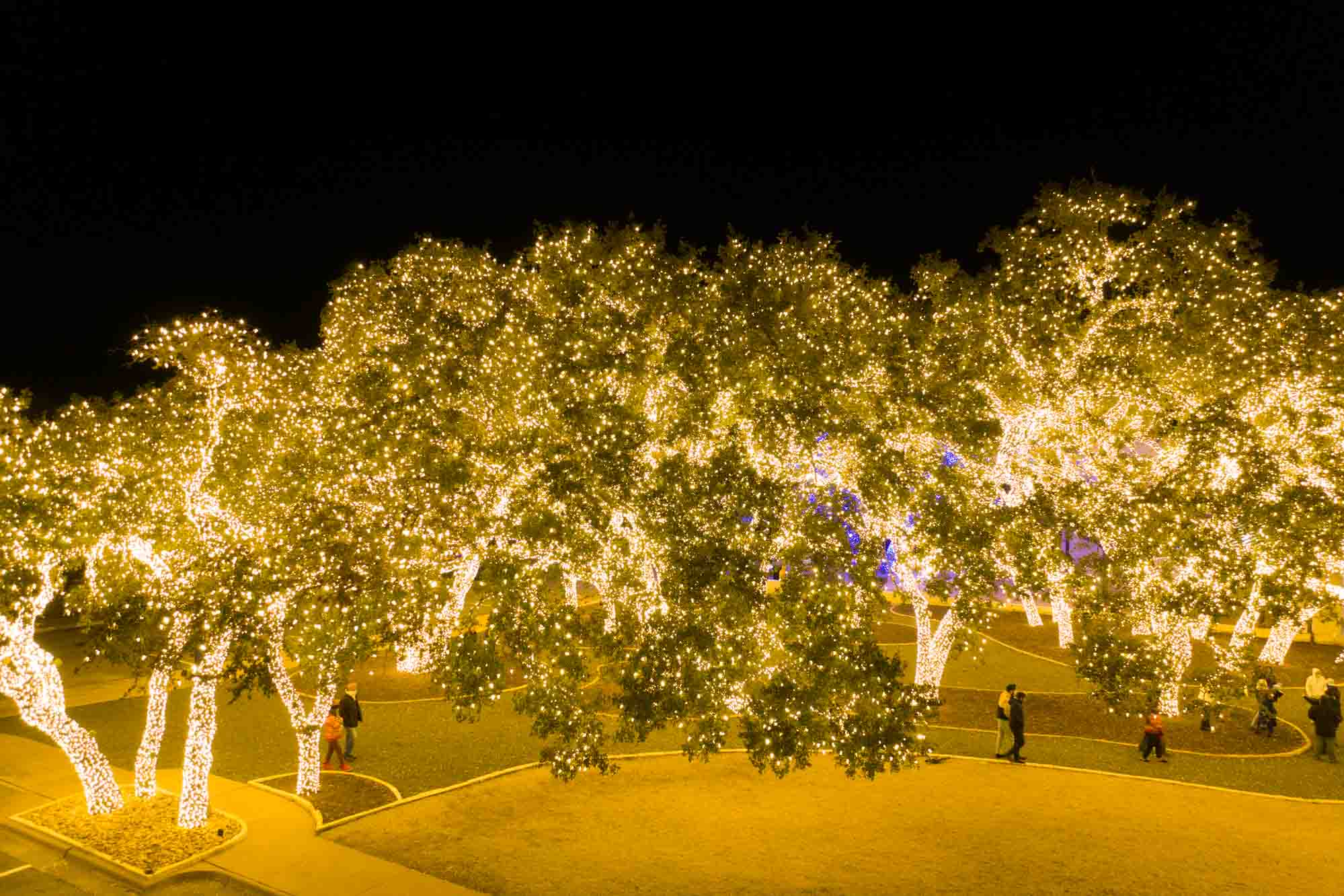 People walking under trees covered in white fairy lights at night