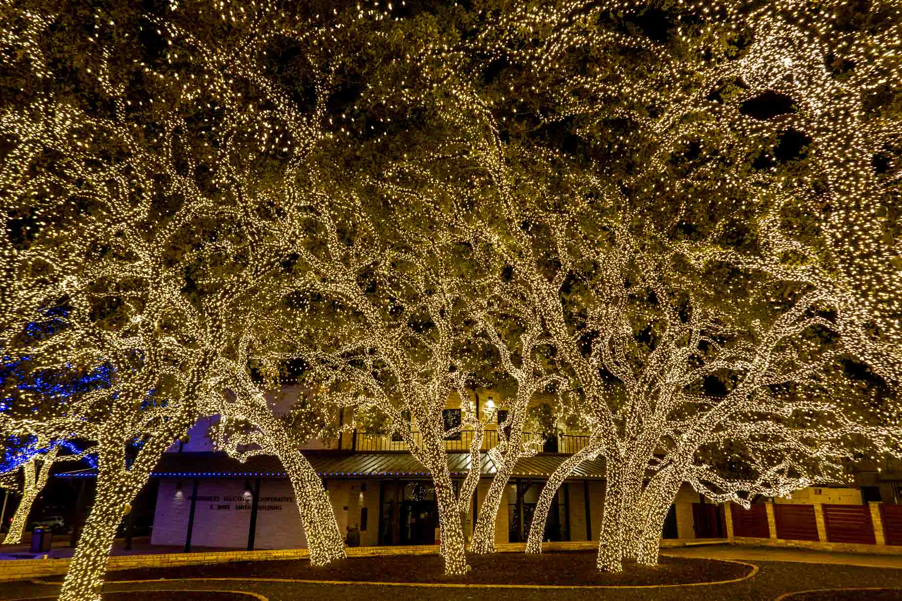 Trees covered in white Christmas lights that fill the frame