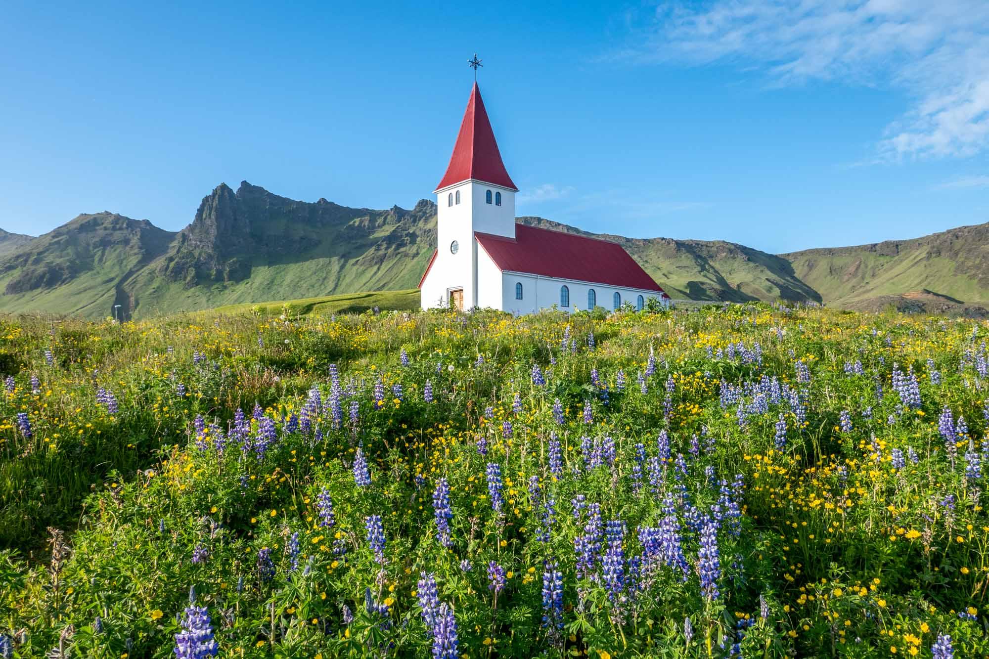 Church in Vík í Mýrdal with lupine flowers