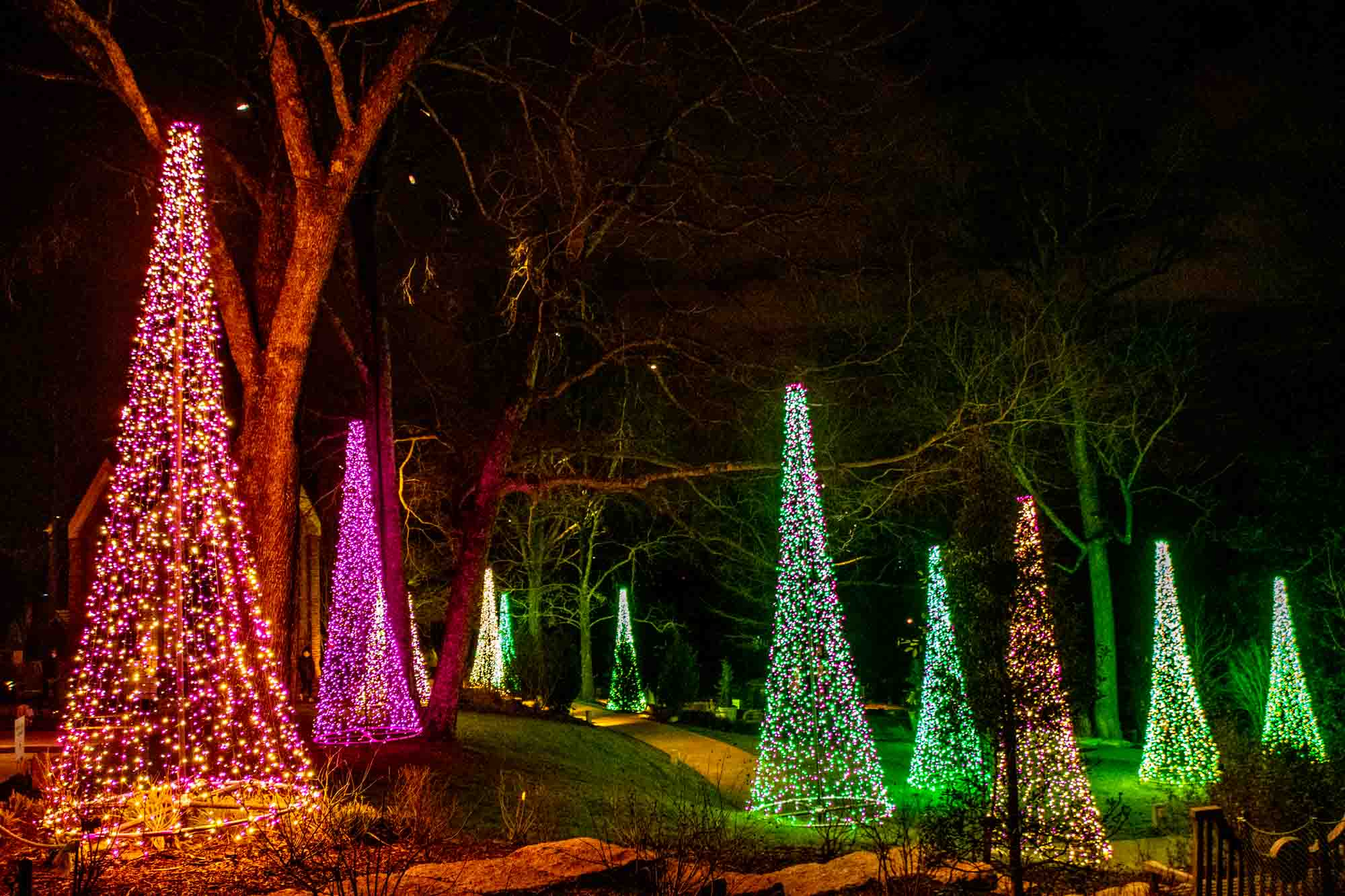 Green, pink, and white lights strung in the shape of Christmas trees