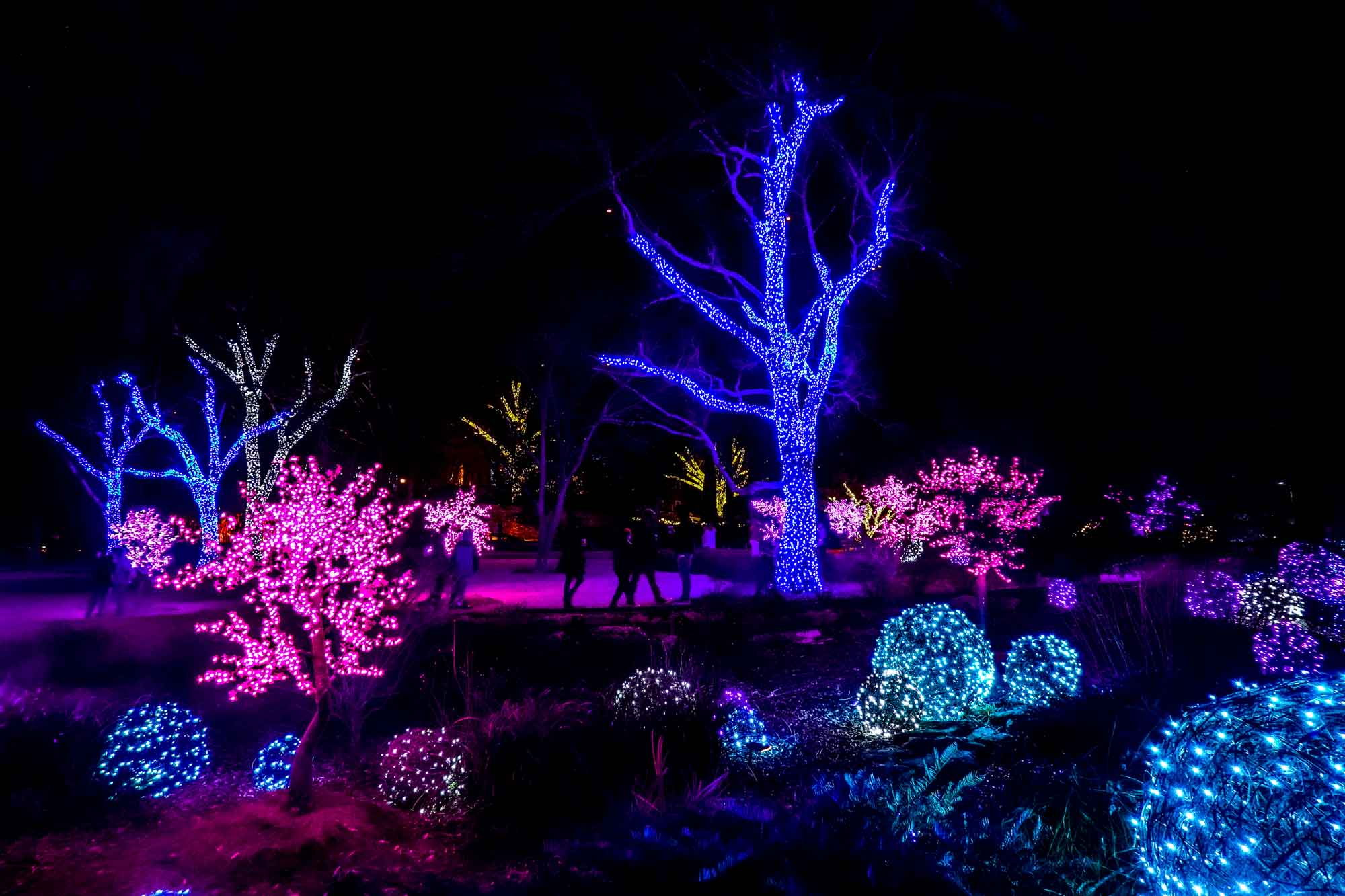 Trees and large orbs covered in blue, purple, and pink Christmas lights at night