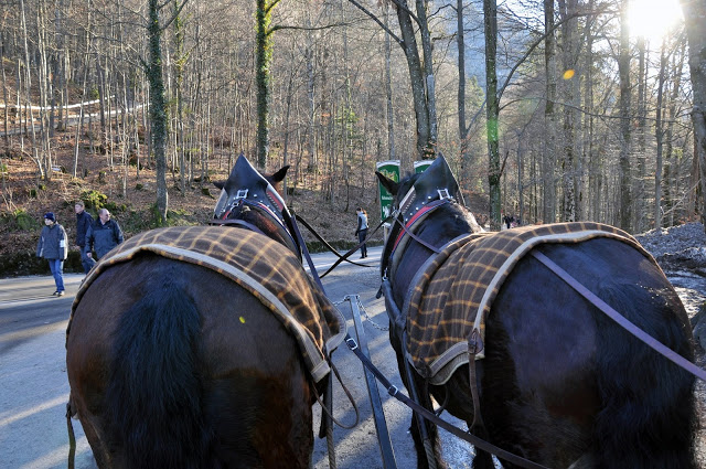 Back of horses pulling carriage at Neuschwanstein Castle