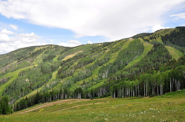 Trees and grass at a ski mountain in the summer